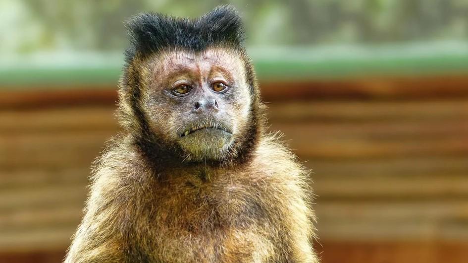 知らない・猿